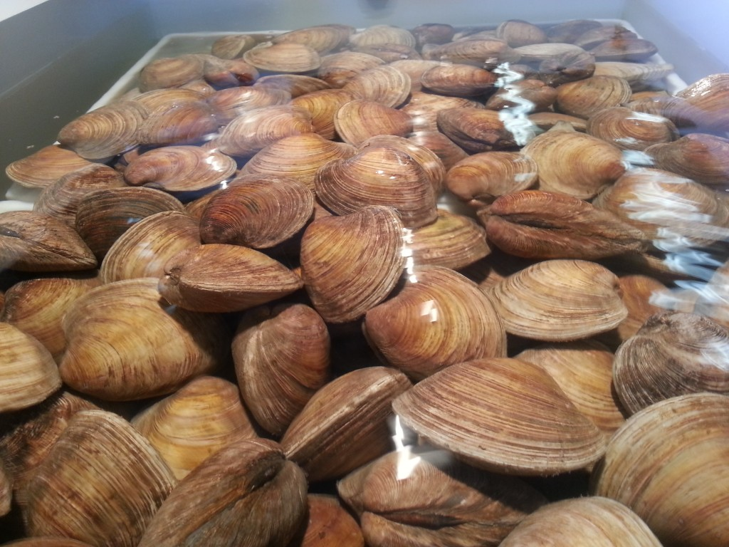 Cherrystone Clams at Quality Seafood