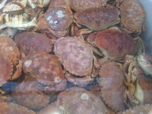 Rock Crab at Quality Seafood